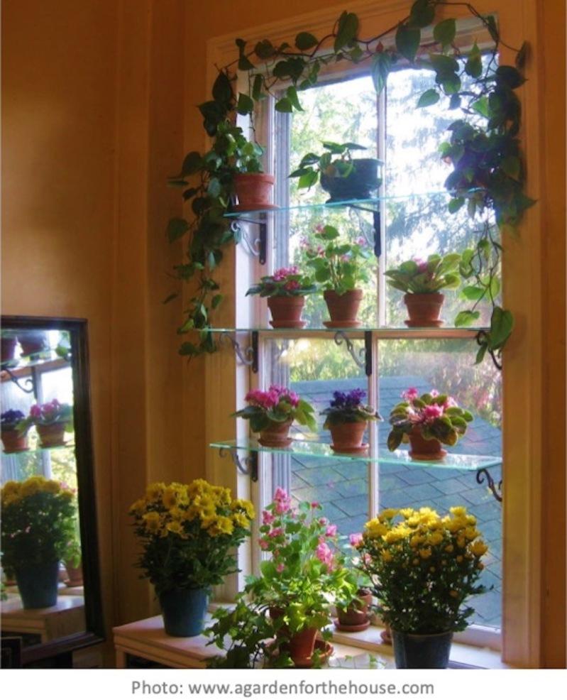 Plante D Intérieur A Faire Pousser Éclairage des plantes d'intérieur – jardinier paresseux