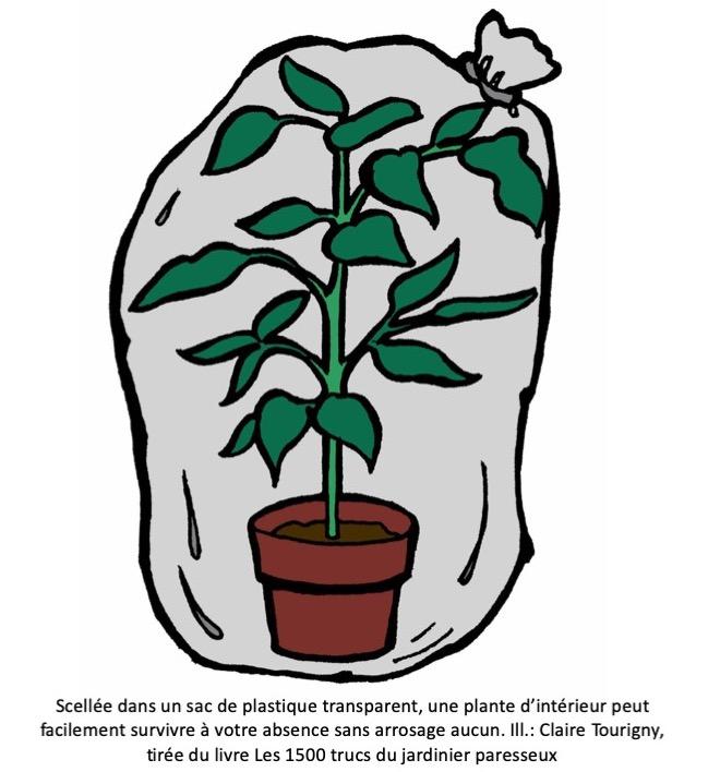 Arroser Plantes Pendant Les Vacances Jardinier Paresseux