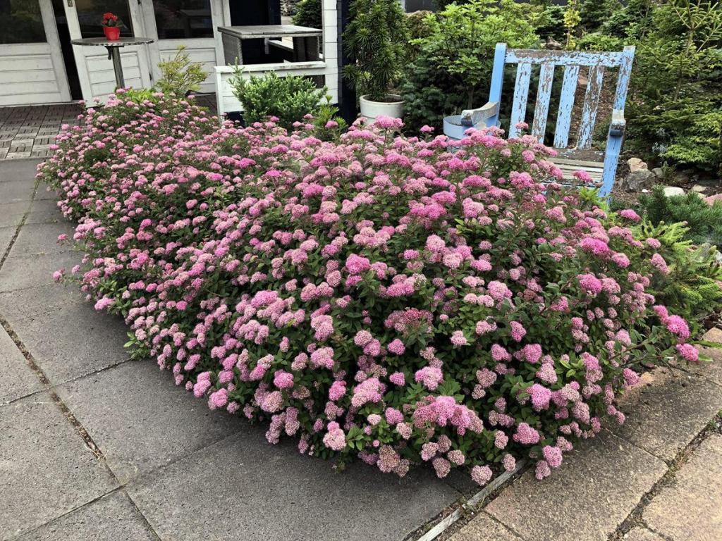 Nouveautés du congrès GardenComm 2019 20190918e-bloomineasyplants.com_