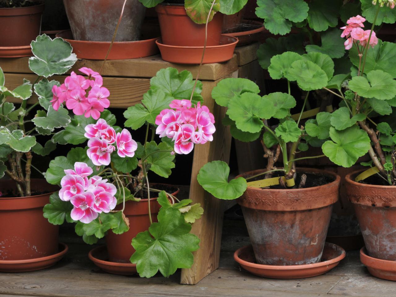 Faut Il Couper Les Lys Après Floraison https://jardinierparesseux/2020/04/06/le-farniente