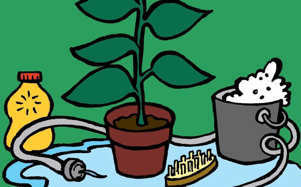 Nécessaire pour rentrer une plante de l'extérieur: plante en pot, eau savonneuse, brosse, tuyau d'arrosage