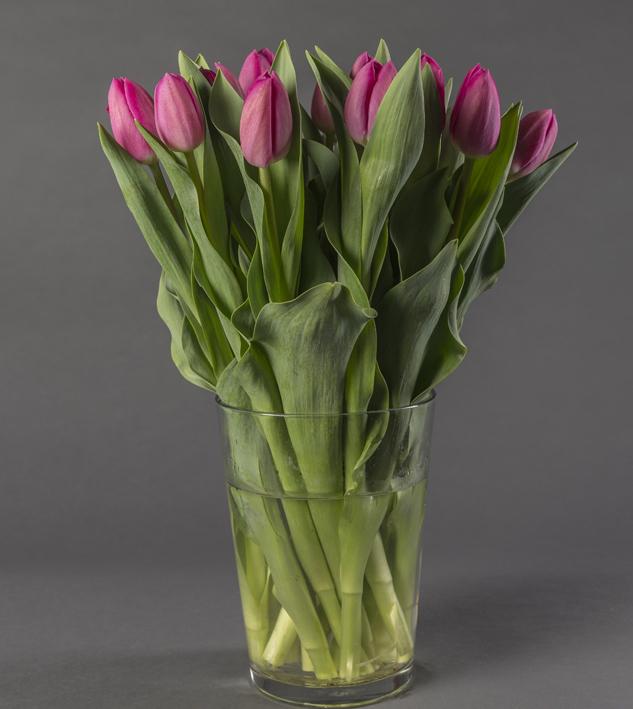 Tulipes lavande foncé coupées plongées dans une vase transparent contenant de l'eau.