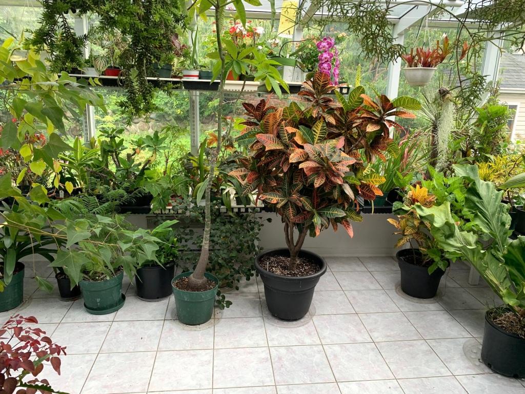 Plantes d'intérieur de toutes les couleurs dans un solarium, plancher en tuiles gris pâle.
