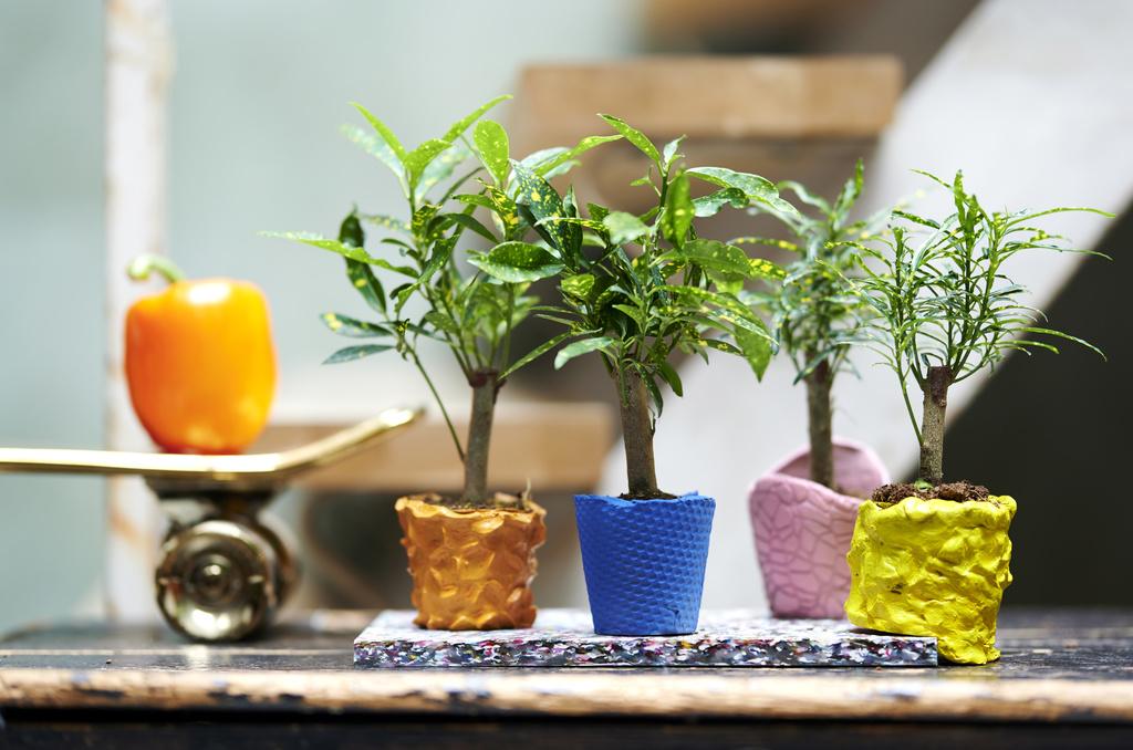Petits crotons dans des pots artisanaux