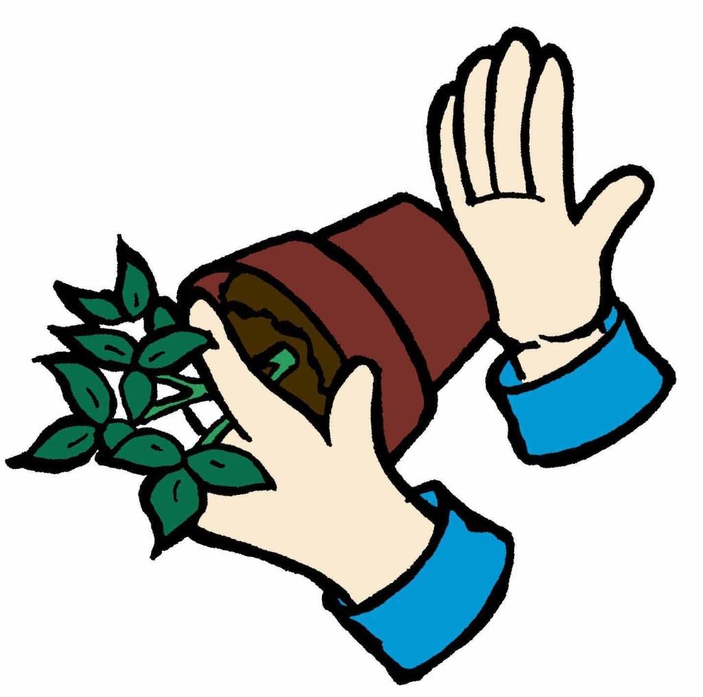 Main tapant sur un pot pour libérer la plant.e