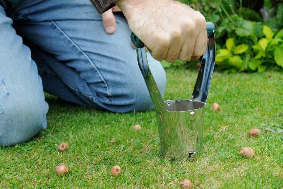 Plantoir à bulbe et petits bulbes sur un gazon