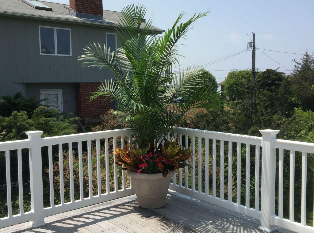 Palmier majesté sur une terrasse estivale.