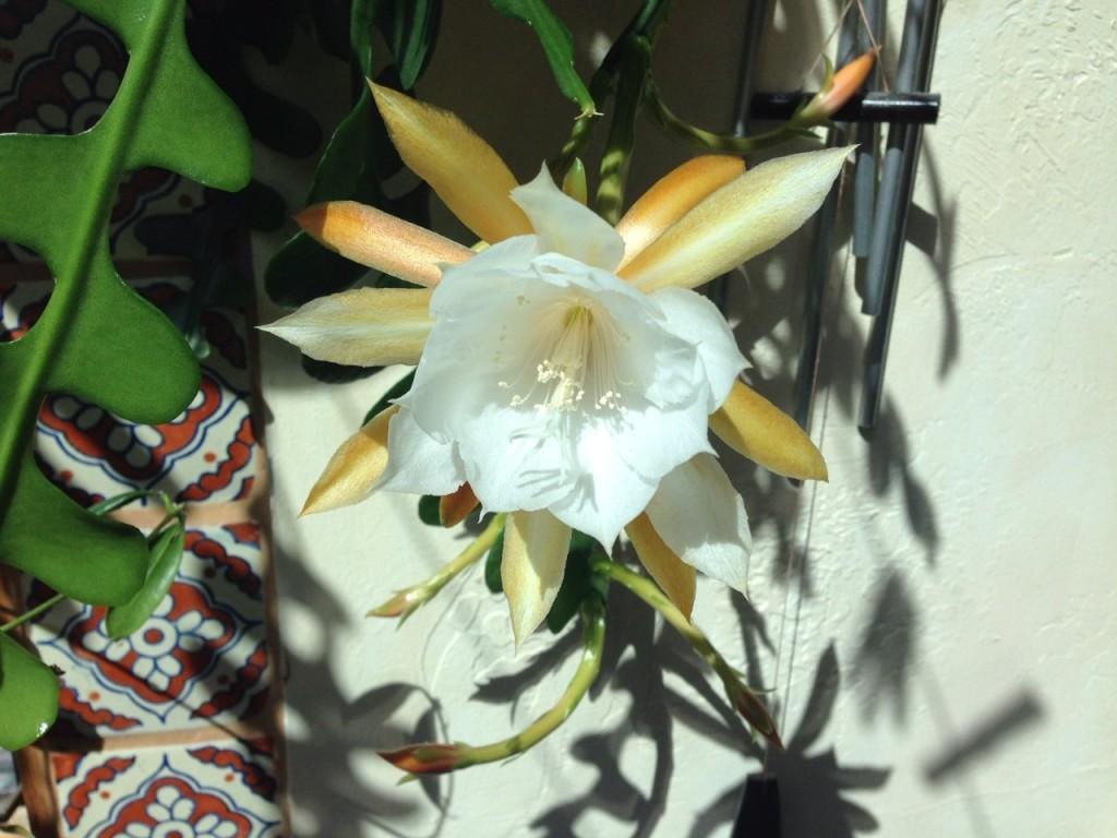 Fleur de Cactus zigzag