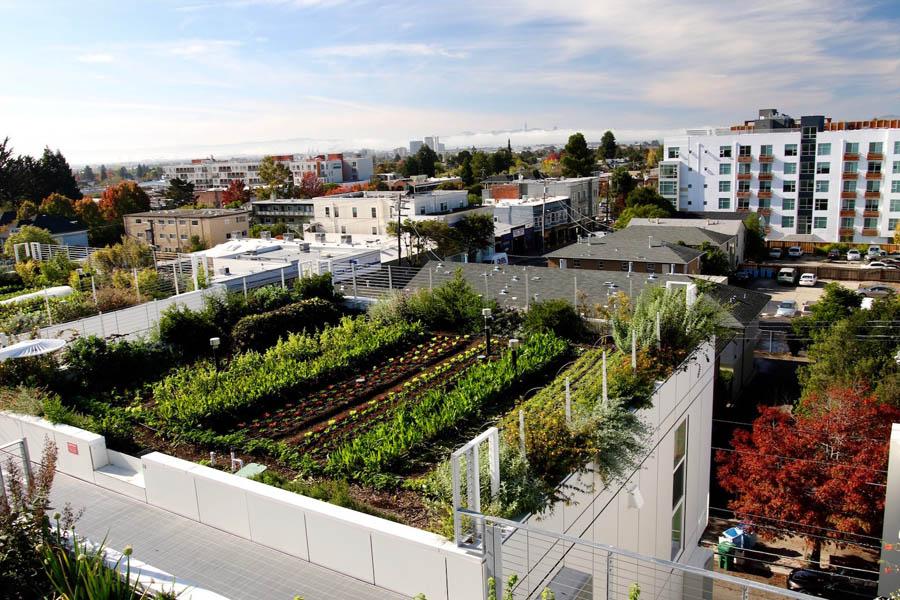 Jardin sur le toit.