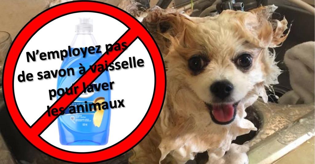 Lavage d'un chien, icône rappelant de ne pas laver les animaux avec un savon à vaisselle.