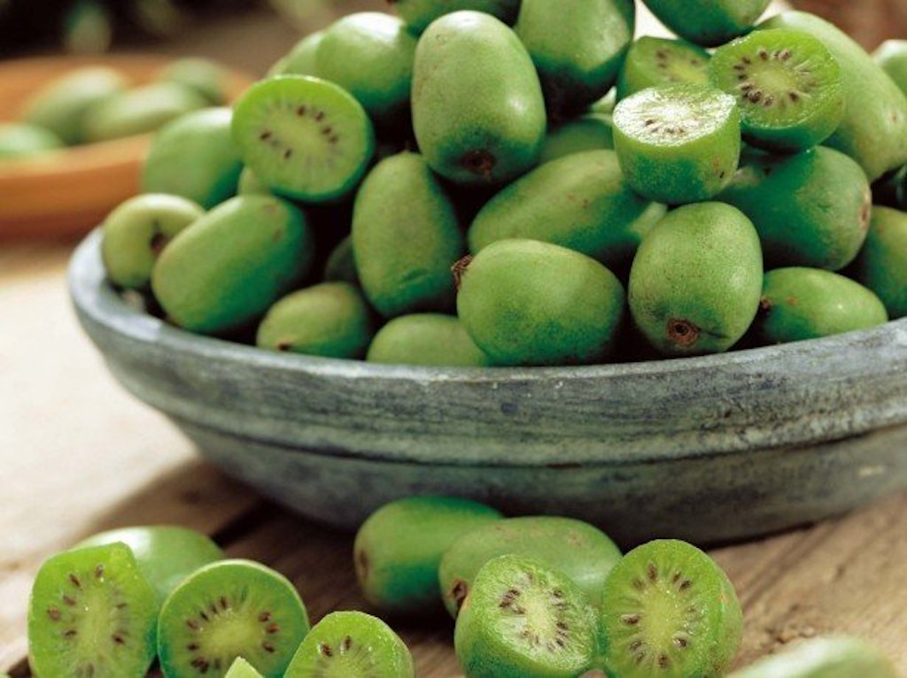 Fruits du kiwi arctique