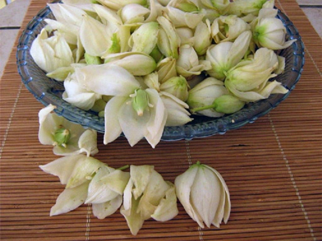 Fleurs blanches de yucca sans épine dans un bol