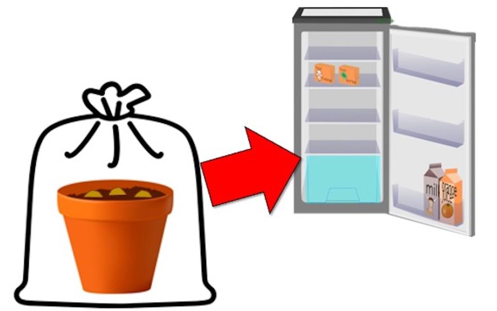 Pot de bulbes de jacinthe dans un sac de plastique prêt à mettre au frigo