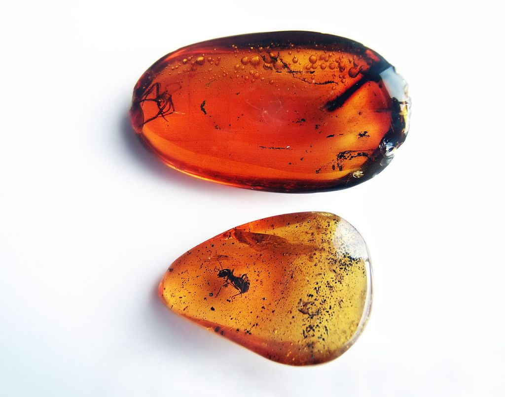 Deux morceaux d'ambre avec des insectes à l'intérieur.