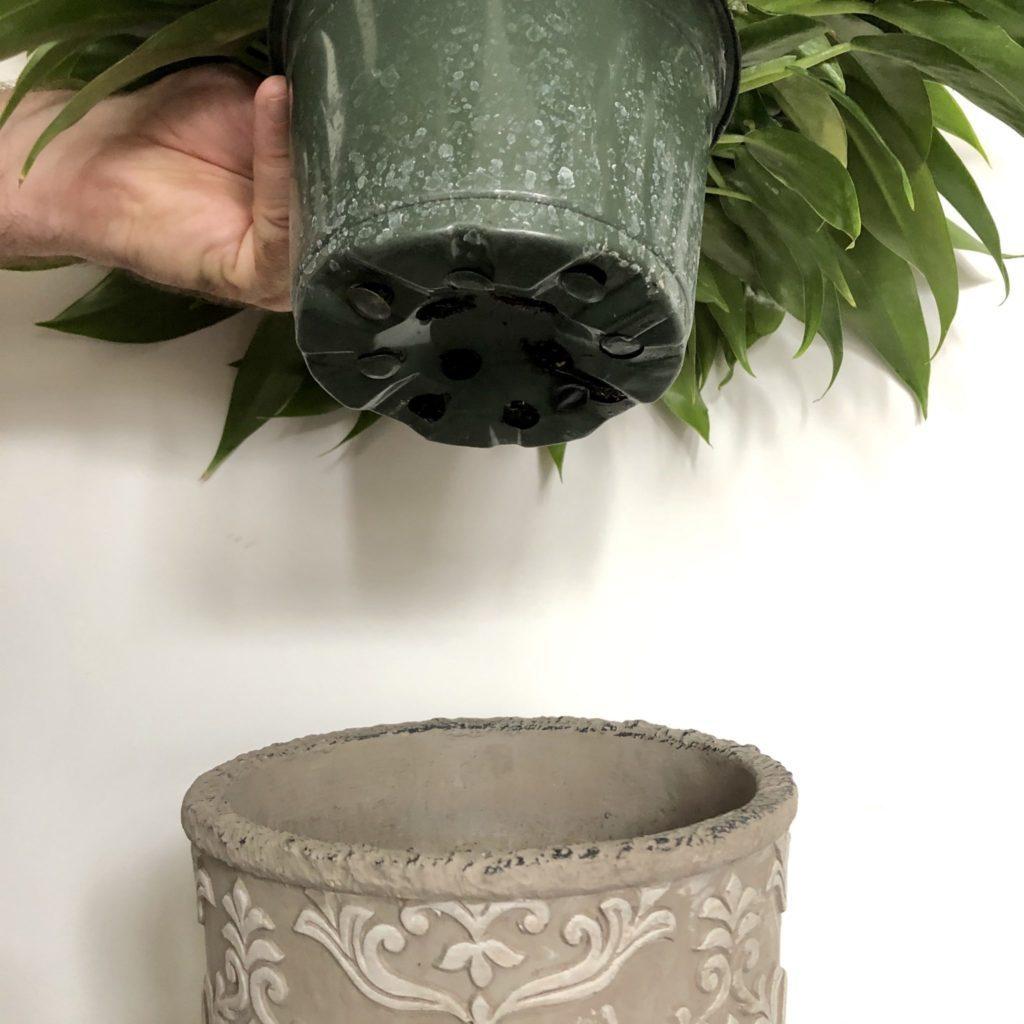 Plante qu'on place dans un cache-pot décoratif