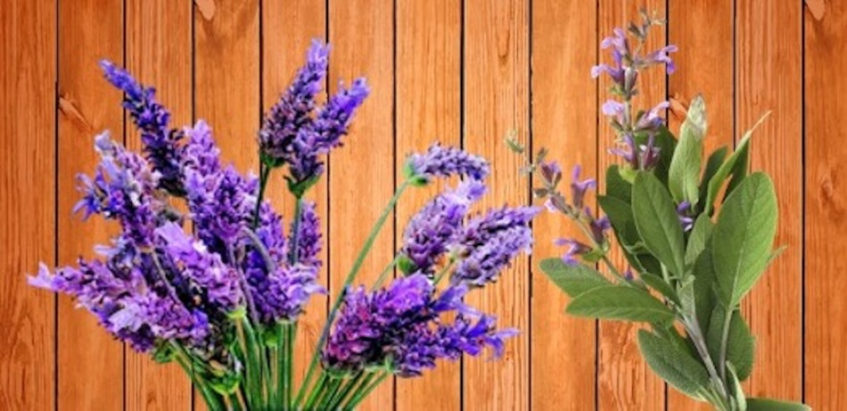 Lavender and sage branches on a wooden table.