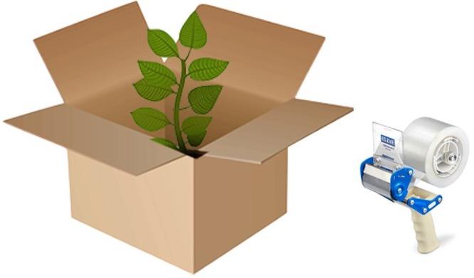 Plante dans une boîte de carton et rouleau de papier collant