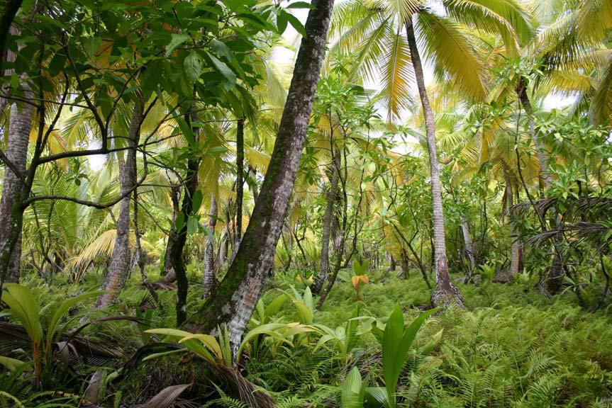 Jungle avec sol couvert de végétation.