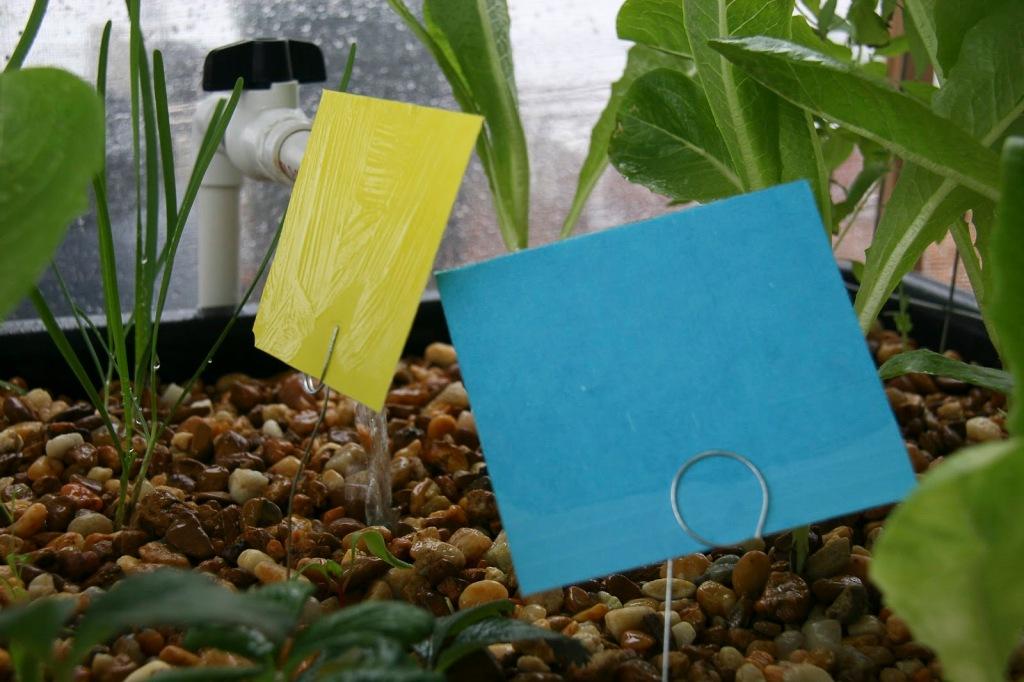 Pièges collants jaunes et bleus