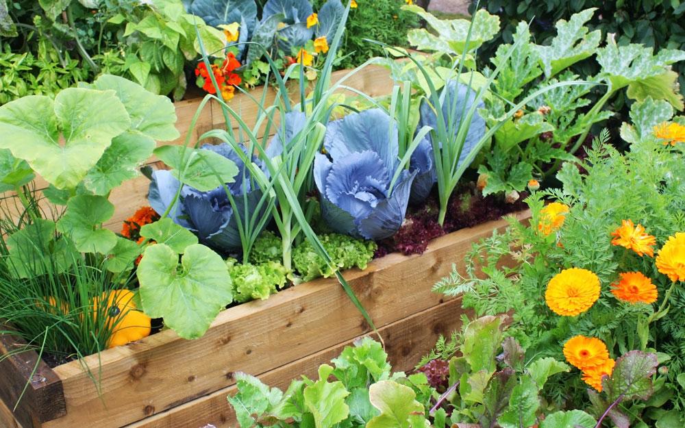 Potager surélevé avec divers légumes