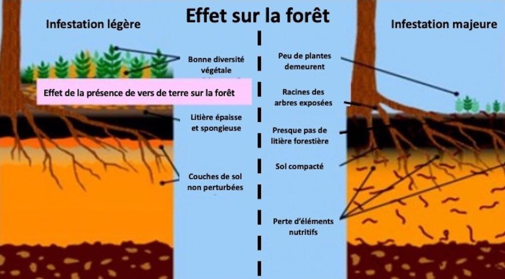Illustration comparant une forêt avant et après les vers de terre.