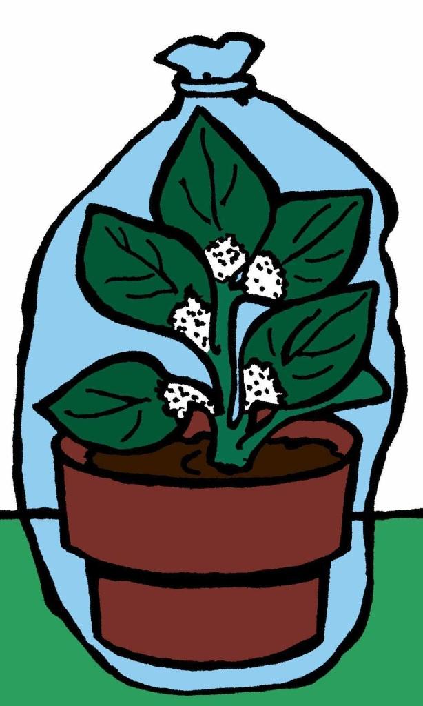 Plante isolée dans un sac transparent.